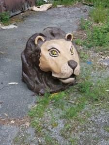 1223 Lion Head